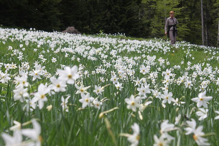 Spring in stunning Slovenia!